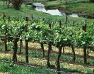Take a tour around the many vineyards